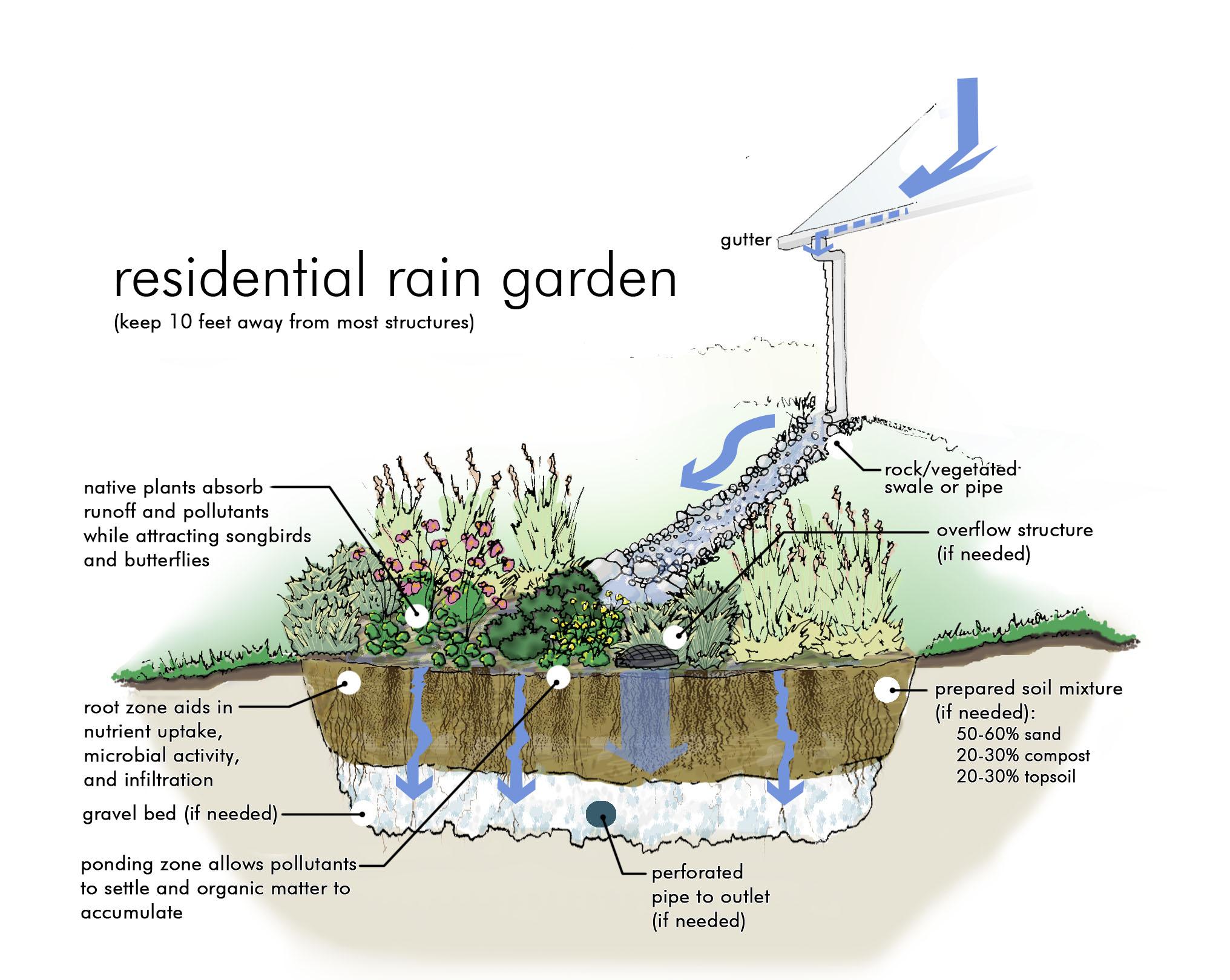 Best 20 Seattle Rain Garden Design Seattle RainWise