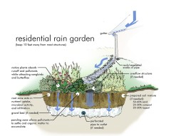 Anatomy of a rain garden