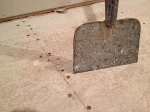 A floor scraper next to screwed-down subfloors
